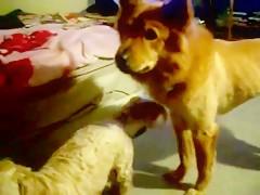 compilacion mamadas perros