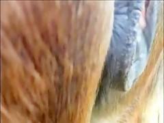 Hombre penetrado por pony