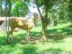 La chupadora de rabos de caballos
