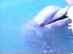 Sexo con delfin en la piscina