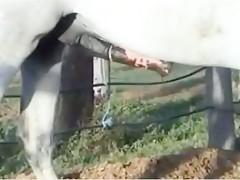 horse borner