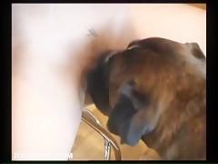 ZoosKool Skye Blu - Skye's 1st Taste Of Puppy Love Part 1
