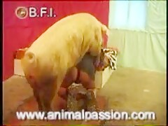 BFI - Man fucked by boar 3